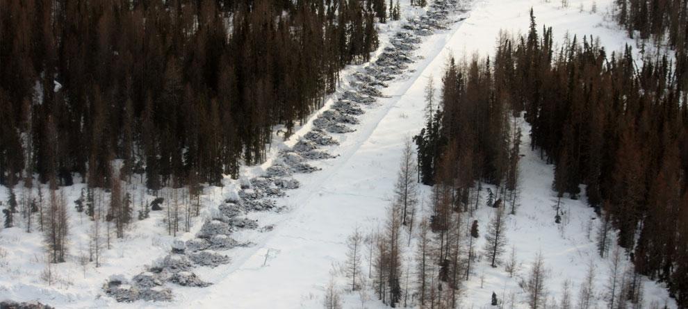 Calgary Winter Tree Panting Inter Pipeline Ltd.